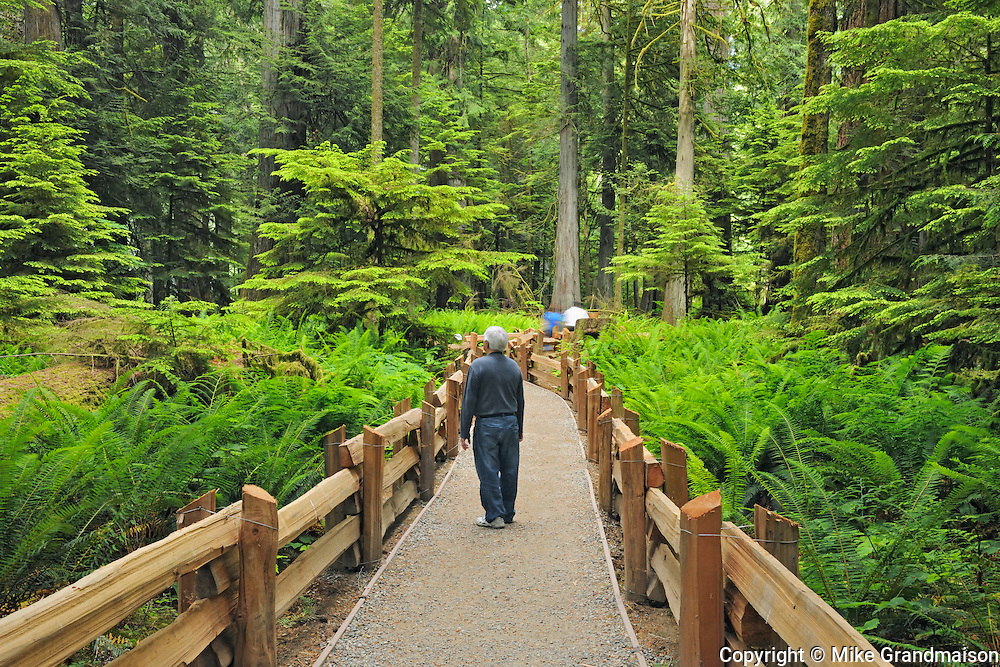 Boardwalk in temperate rain forest of Cathedral Grove<br /> McMillan Provincial Park (Cathedral Grove)<br /> British Columbia<br /> Canada