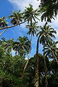 Puamua, Hiva Oa, Marquesas, French Polynesia<br />