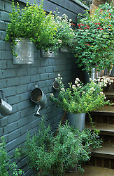 Herbs in galvanised containers on steps by kitchen