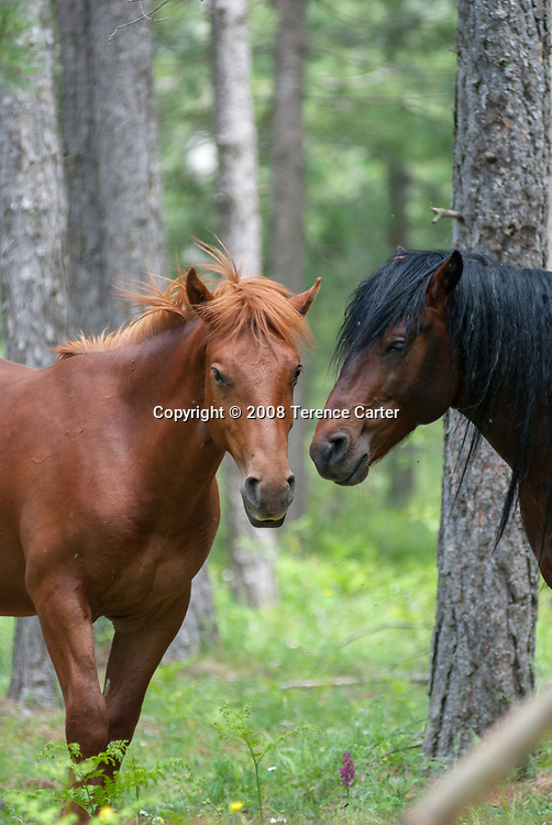 Beautiful horses in the national park.