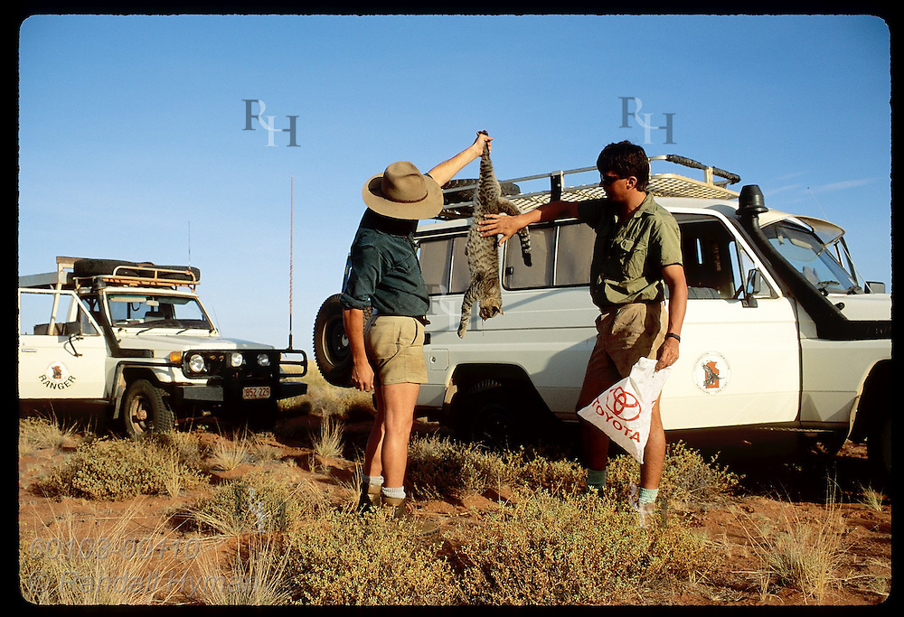 Geoff Lundie-Jenkins and field asst examine feral cat they just killed; mala reintro site/Tanami Australia