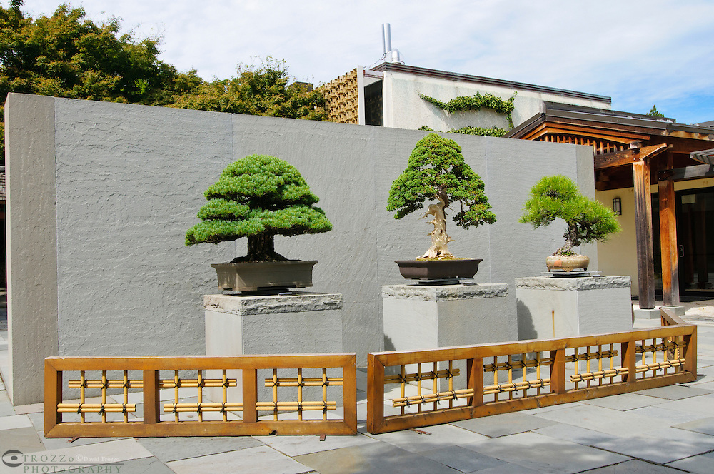 National Bonsai & Penjing Museum located at the National Arboretum in Washington D.C., USA,  has one of the largest collections of these trees in North America.