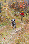 An upland hunter follows his enthusiastic setter during a hunt in northern Wisconsin.