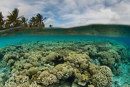 Coral reef, Tahanea Atoll, Tuamotu Archipelago, French Polynesia. An over-under split shot.