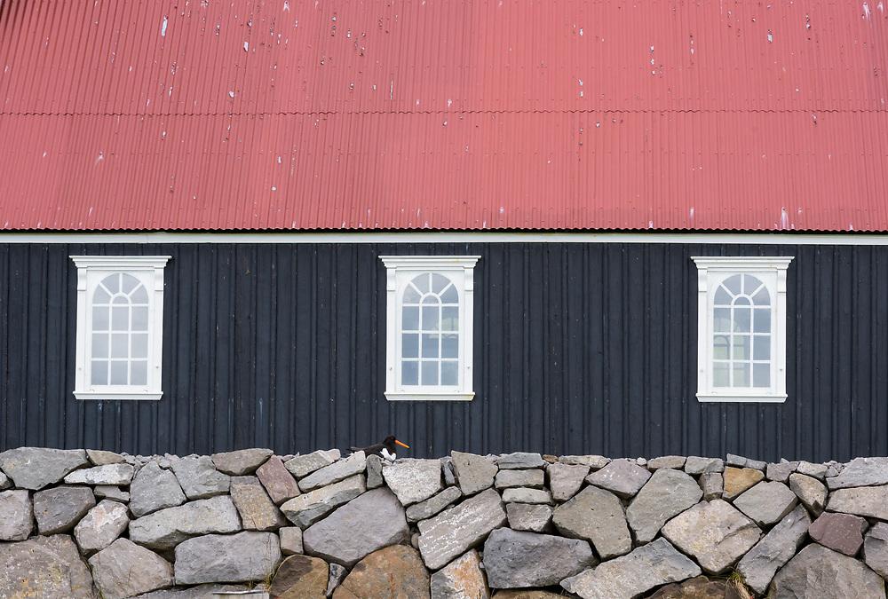 Church and oystercatcher, Raudasandur, Iceland
