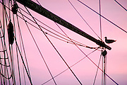 Tall Ship, Schooner, Main Mast, Sea Gull, Silhouette