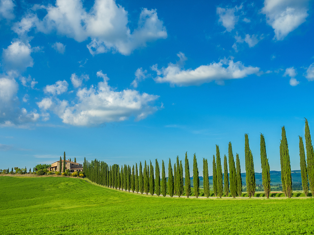 Rolling hills and cypress trees near Castiglione D'orcia, Tuscany.