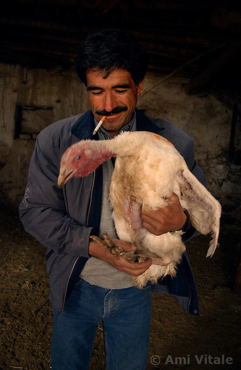 Ali Ipak  feeds their turkeys that were given to them by the Food and Agricultural Organization telefood project December 13, 2005 in central Turkey, Konya in Kutoren district, about 400 kilometers from Ankara. The projects are meant to improve rural poor families livelihoods. (Ami Vitale)