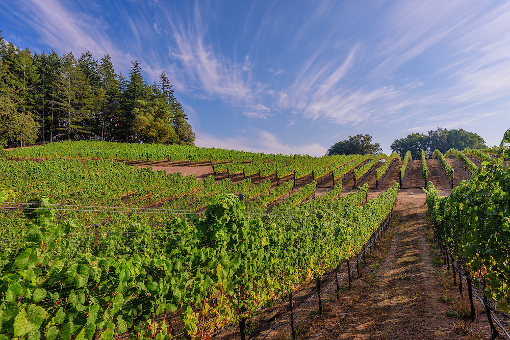 Fort Ross Vineyard, Jenner, California