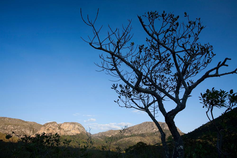 Santana do Riacho_MG, Brasil...Arbusto no Alto Palacio no Parque Nacional da Serra do Cipo...The shrub in Alto Palacio in the Serra do Cipo National Park...Foto: JOAO MARCOS ROSA / NITRO