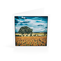 Photo Art Greeting Card | New England Collection | Macintyre Valley Inverell district | Printed on lightly textured matte art paper stock, blank inside. White envelope included, packaged in sealed poly bag. Dimensions: Card 123 x 123mm. Envelope 130 x 130mm.<br /> <br /> Click &quot;Add to Cart&quot; to compose your own mix of 5 or 10 cards from this collection.