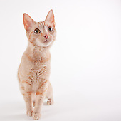 Michael Kloth Photography adoptable pet pictures