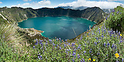"Lupine flowers bloom above beautiful Lake Quilotoa, Ecuador, South America. Quilotoa, a tourist site of growing popularity, is a scenic water-filled caldera that is the westernmost volcano in the Ecuadorian Andes. The 3 kilometers (2 mile) wide caldera (diameter about 9km) was formed by the collapse of this dacite volcano following a catastrophic VEI-6 eruption about 800 years ago, which produced pyroclastic flows and lahars that reached the Pacific Ocean, and spread an airborne deposit of volcanic ash throughout the northern Andes. The caldera has since accumulated a 250 meter (820 foot) deep crater lake, which has a greenish color from dissolved minerals. Fumaroles are found on the lake floor and hot springs occur on the eastern flank of the volcano. The route to the ""summit"" (the small town of Quilotoa) is generally traveled by hired truck or bus from the town of Zumbahua 17 km to the South. Lupinus is a genus in the pea family (also called the legume, bean, or pulse family, Latin name Fabaceae or Leguminosae). Panorama stitched from 9 overlapping images."