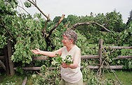 Josephine Leuzzi, owner of this historic five-hundred-fifteen-year-old sixty-foot white oak tree, which was possibly the oldest tree east of the Mississippi River, is shown Wednesday, June 2, 1999, in Solebury, Pa. The tree split in two on Memorial Day, a victim of old age. Leuzzi, owner of the tree, agreed it was like losing a member of her own family. In the (Photo by William Thomas Cain)