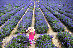 © Licensed to London News Pictures. 19/07/2018. Banstead, UK. A woman stands amongst a field of Lavender plants at Mayfield Lavender Farm in Banstead. Photo credit: Grant Falvey/LNP