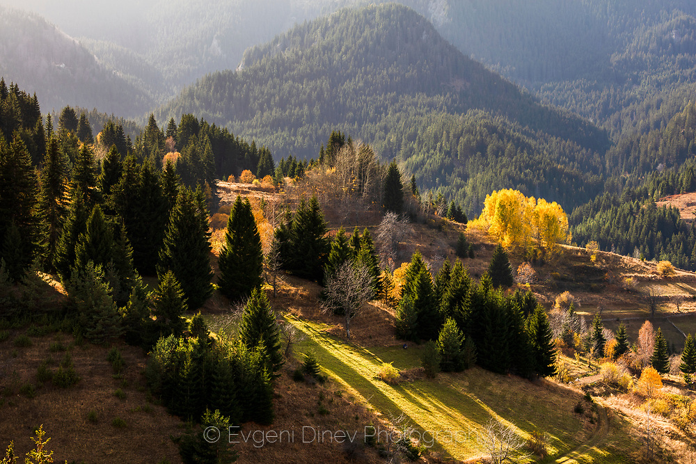 Pastoral landscape at autumn time with yellow trees in the mountain