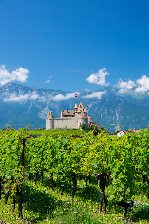 Chablais vines in front of the Chateau de Aigle in the Chablais region of Switzerland