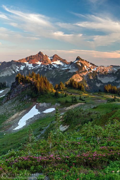 Wildflowers and a view of the Tatoosh Range from Mazama Ridge in Mount Rainier National Park, Washington State, USA.