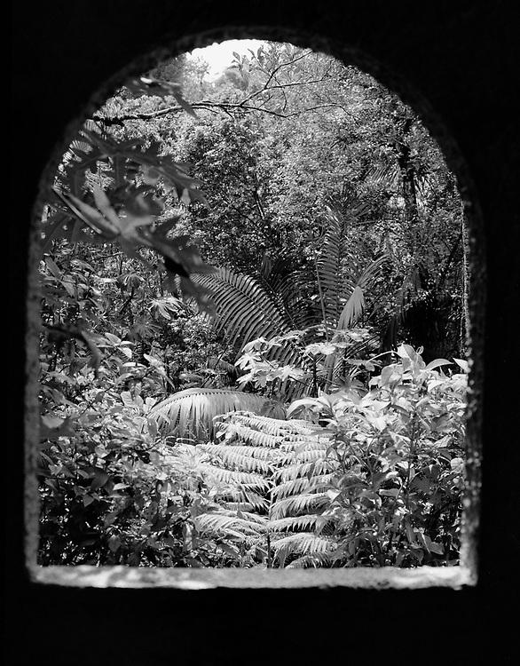 El Yunque is the rain forest in Puerto Rico.