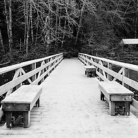 A boardwalk covered in heavy frost on a frozen lake leading into a forest.