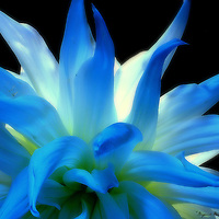 This photograph is dedicated to a very special lady, Maureen Mckenzie and a wonderful organization, 'Beyond Blue.'