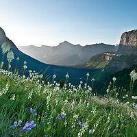 glacier park bear grass, sun rise glacier national park, logan pass glacier park, going to the sun mountain glacier park, heavy runner mountain glacier park,