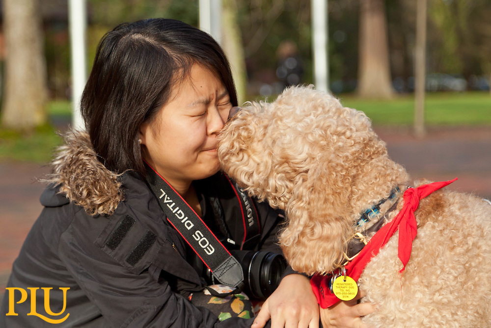 Shunying Wang with Fozzie Bear one of the therapy dogs helping take away stress for leading into finals week at PLU on Friday, Dec. 12, 2014. (Photo/John Froschauer)