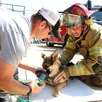 Joel Goss, a firefighter with the Tupelo Fire Department and Steve Shaffer, a Captain with the Tupelo Fire Departmant, work to place a canine oxygen mask on Lucy, a one year old German Shepherd, during a rescue demonstration at the North Mississippi Law Enforcement Training Center on Wednesday afternoon. A fundraiser purchased enough oxygen masks for animals to present to each one of the volunteer fire departments in Leee County and the city of Tupelo.