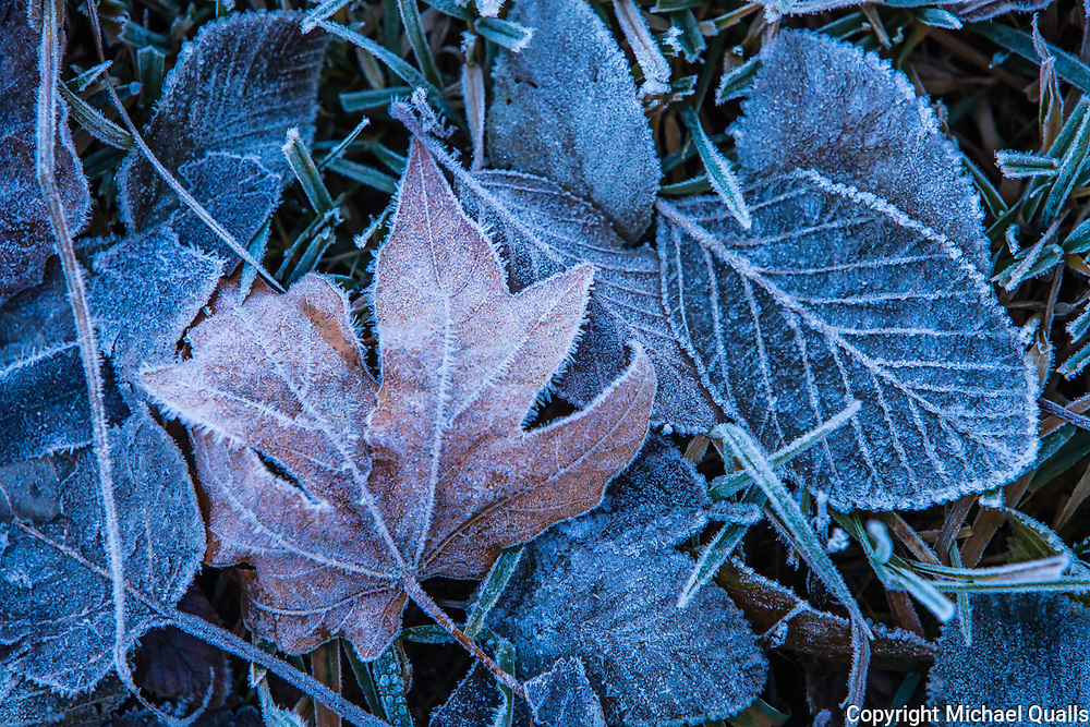 Fallen Leaf in Yosemite Winter