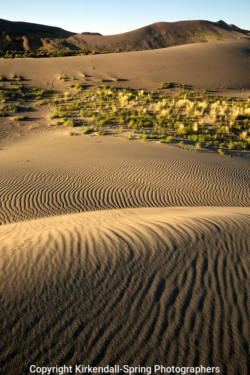 ID00673-00...IDAHO - Patterns on the sand dunes at Bruneau Dunes State Park.