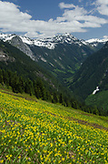 Ruth Creek Valley, North Cascades Washington. Yellow Avalanche Lilies (Erythronium grandiflorum) are in the foreground)