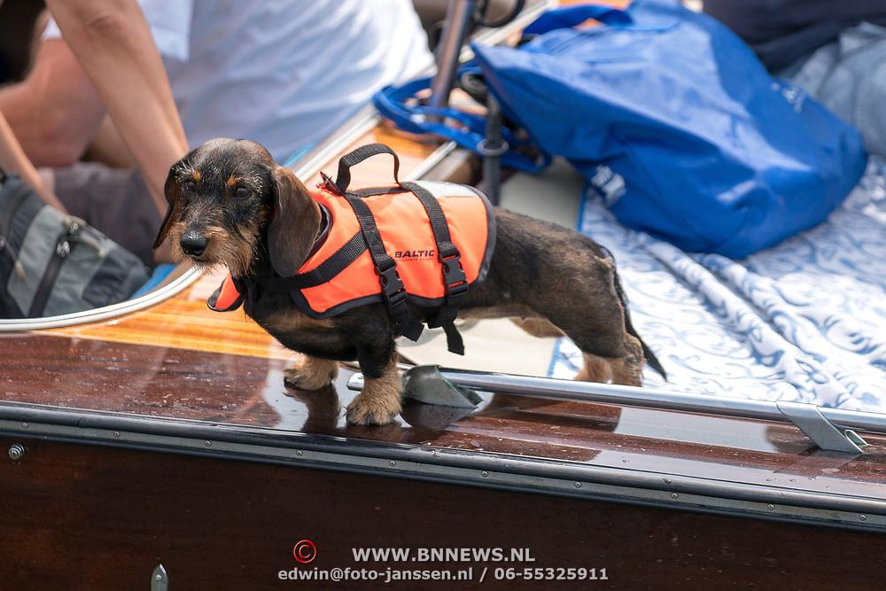 NLD/Amsterdam/20180604 - Gaypride 2018, teckel met zwemvest