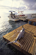 Marlin, Papeete, Tahiti, French Polynesia<br />