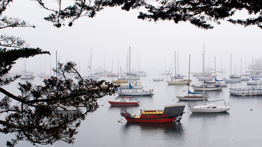 Morning fog blankets the quiet boats of Monterey harbor