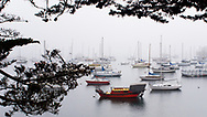 Morning fog blankets the quiet boats of Monterey harbor, framed by the branches of a tree