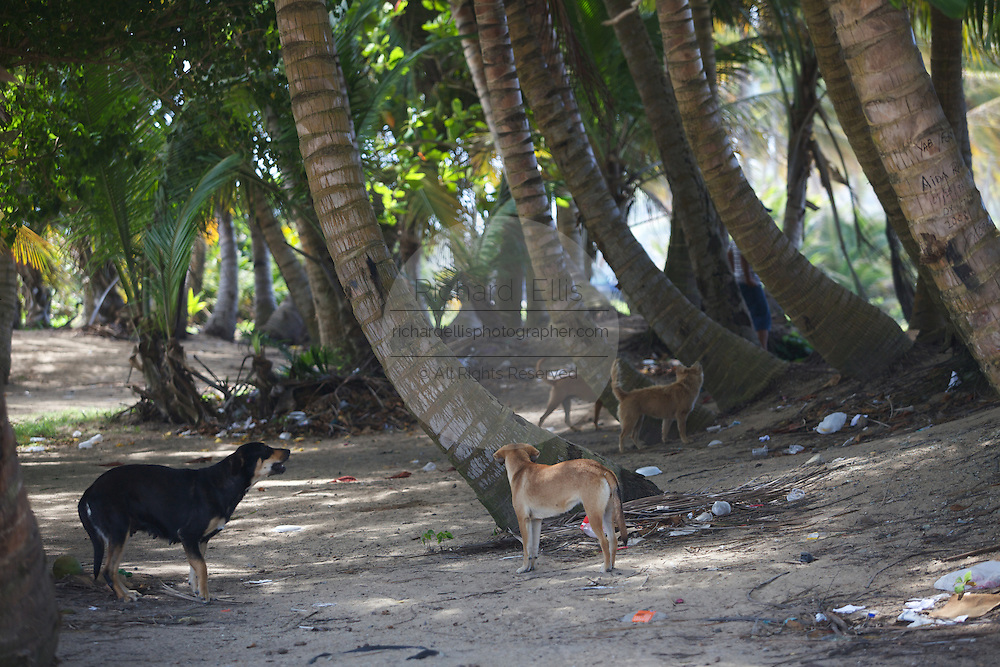Yabucoa, PR - February 23, 2009:  An abandoned abused stray dog along the coast of Yabucoa in southeast Puerto Rico February 23, 2009. The area is known as Dead Dog Beach because of the number of abandoned dogs which are routinely abused by local residents. (Photo by Richard Ellis)
