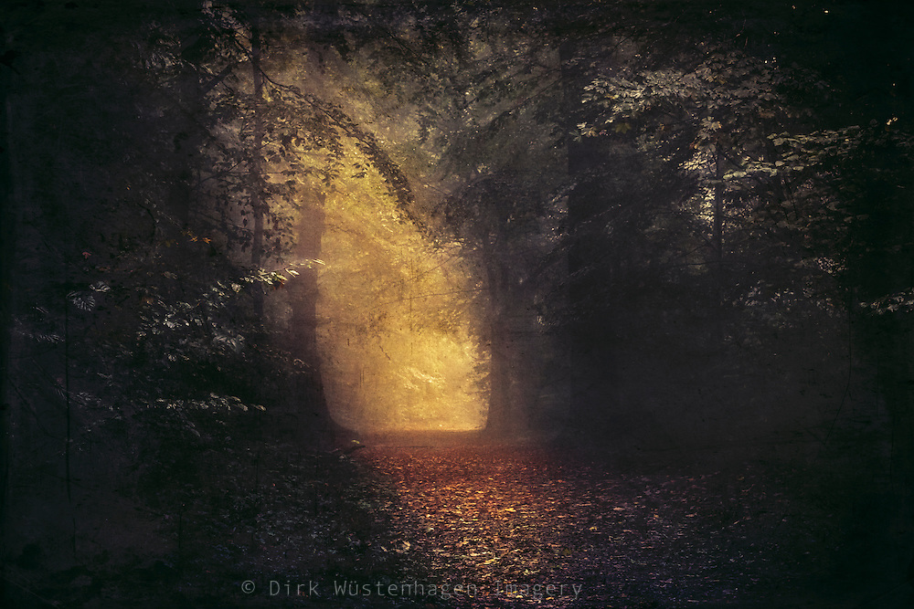 ominous light in a misty forest - textured photograph<br /> Society 6 products: https://society6.com/product/a-place-beyond_print#1=45<br /> Redbubble products: http://www.redbubble.com/people/dyrkwyst/works/19742413-a-place-beyond