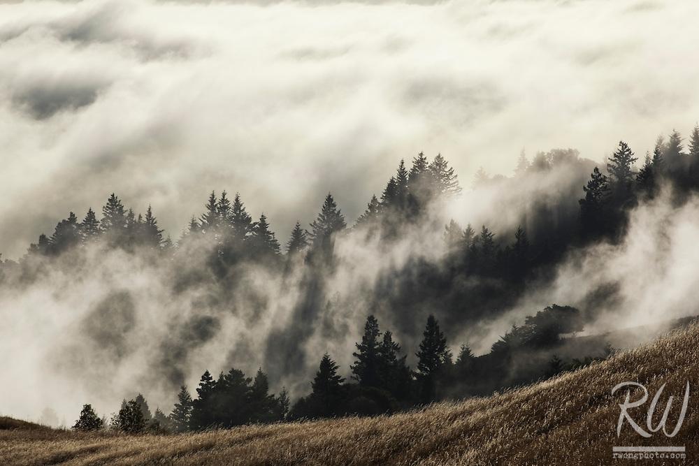 Summer Fog Rolling into Bolinas Ridge at Sunset, Mount Tamalpais State Park, California