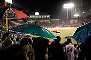 "Supporters of The Tokyo swallows hold umbrella and sing ""Tokyo Ondo"" to celebrate  and  a score by the team at the Jingu Baseball Stadium in Tokyo during a game Tokyo Swallows VS Hiroshima Carp, Japan. 21/04/2017-Tokyo, JAPAN"