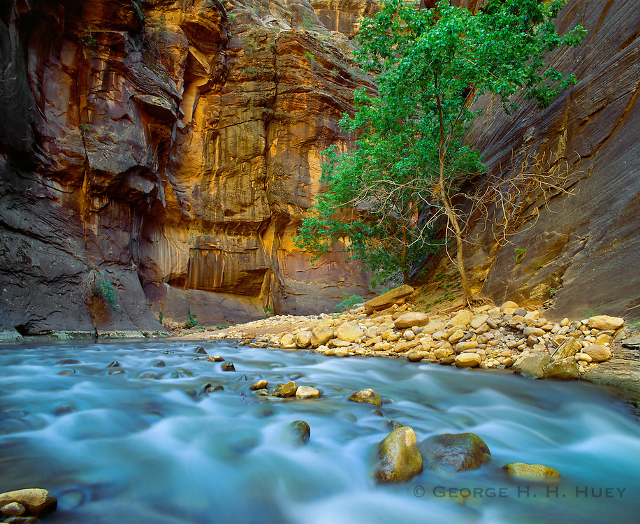 0311-1005B ~ Copyright: George H. H. Huey ~ The Narrows with the Virgin River. Zion National Park, Utah.