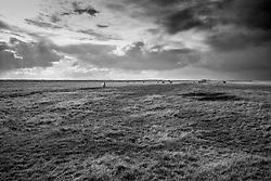 Horses near Hella, south Iceland-  Hestar á Suðurlandi