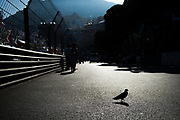 May 24-27, 2017: Monaco Grand Prix. a bird walks the track in monaco