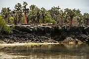 Tortuga Bay<br /> Santa Cruz Island<br /> Galapagos<br /> Ecuador, South America