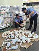 Customs Seizes 2674 Smuggled Skinless Pangolin Bodies