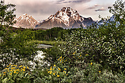 Mount Moran and the Grand Teton mountains peak out through the forest at Oxbow Bend at dawn with the rising sun reflected on clouds at the Grand Teton National Park in Moran, Wyoming.