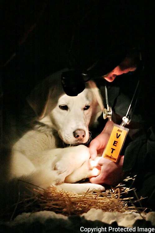 Race veterinarian Dr. Markus Bart examines the paw of one of Wayne Hall's dogs at the Circle City checkpoint.