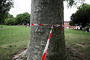 red and white safety tape knotted around a tree in a public park