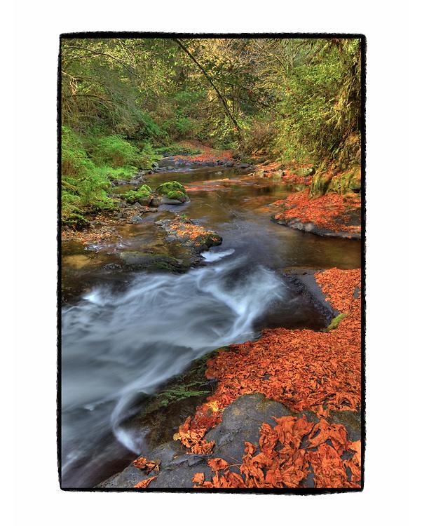 Sweet Creek Cascade Falls - Mapleton, Oregon - HDR - Custom Sloppy Border
