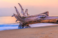 Tree trunk in the surf on the Outer Banks of NC.