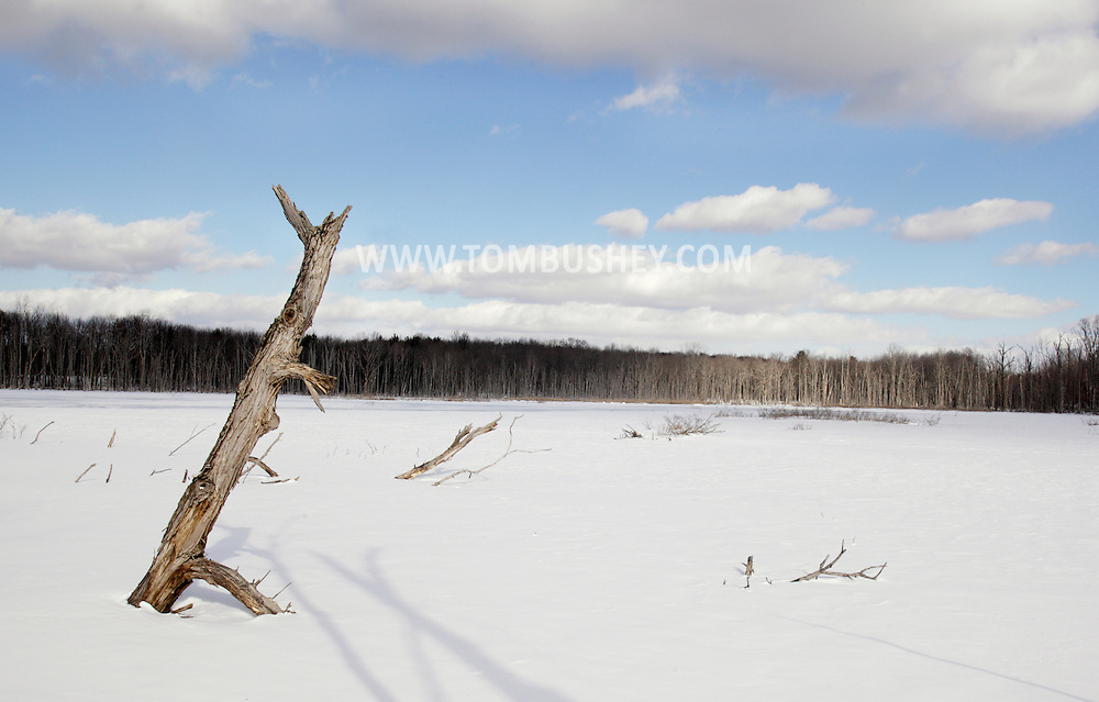 Middletown, New York - Dead trees stand in the ice of a flooded forest wetland area on Jan. 16, 2011.